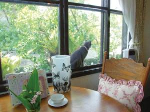 風を感じられる窓と 網戸の間が大好きなリオン