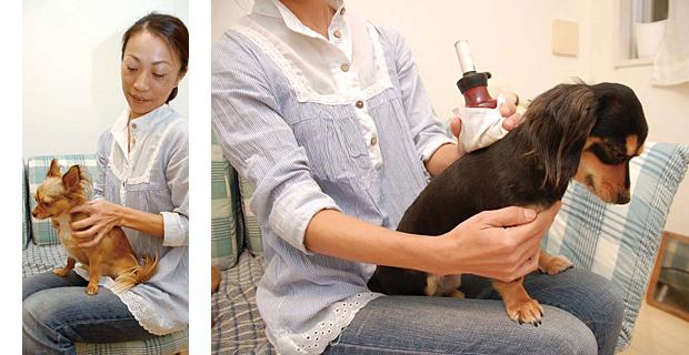 愛犬のためのホリスティックケア