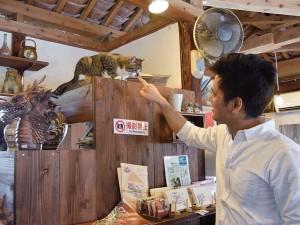 老舗店で 伝統を守る看板猫 at つぼや工藝店