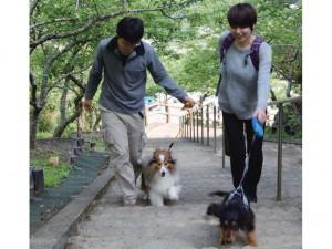 Wanの散歩道