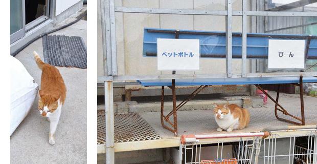 幸運を呼び込む 招き猫? at フジ砕石